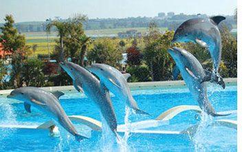delfini-zoomarine